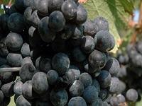 chamard-vineyards-wineries-ct