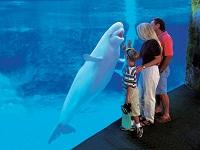 mystic-aquarium-aquarium-ct