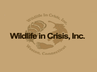wildlife-in-crisis,-inc.-zoos-ct