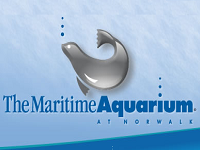 the-maritime-aquarium-at-norwalk -best-attractions-ct